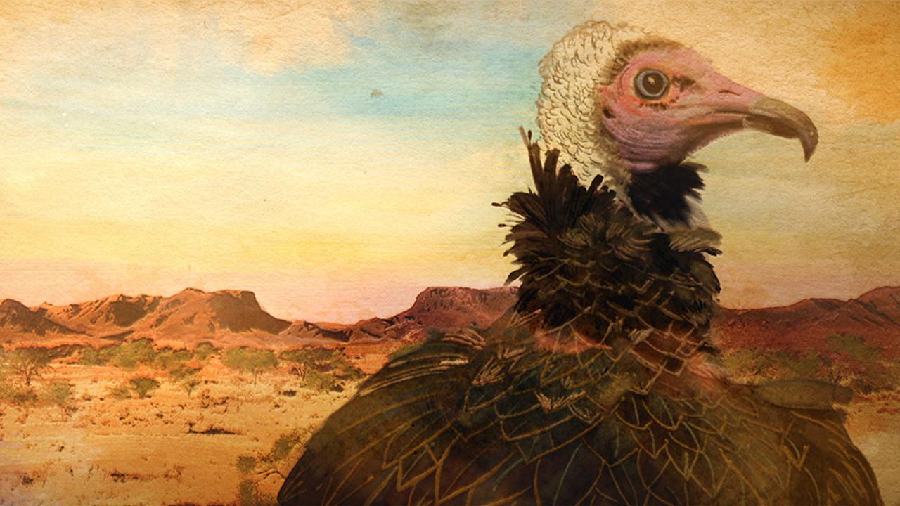 Qasr Al Hosn Festival | Bird Show